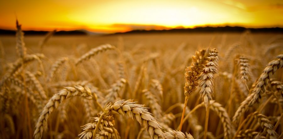 harvest-038-900x444.jpg