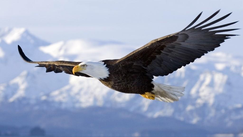 soaring-eagle-1024x576.jpg